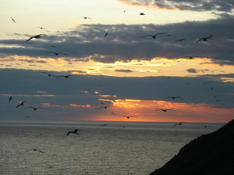 Bird sunset.