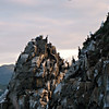 Umara Island birds roosting.