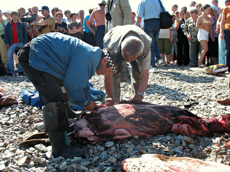Indigenous people are allowed to catch & kill seals.