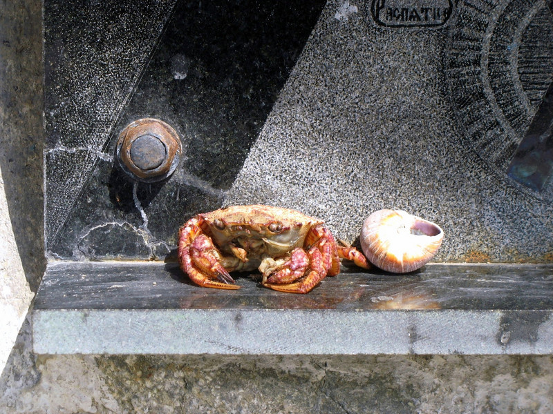 Crab on the chapel altar.