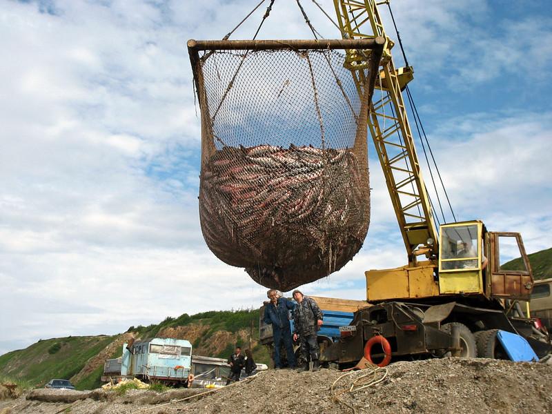 Big catch. (Cape Nuklya, Russia)