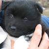 Tundra puppy.