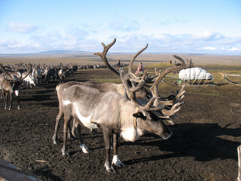 Impressive antlers. They're even bigger than they appear.
