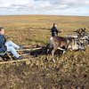 Getting a ride on a Nenets reindeer sledge.