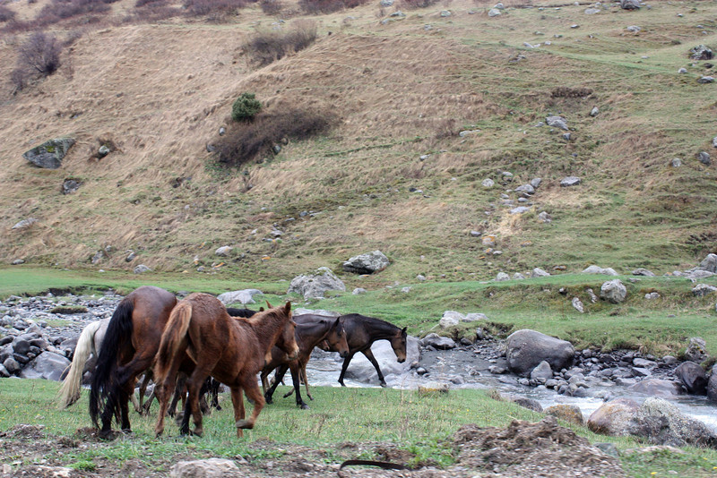 Horses by the river.