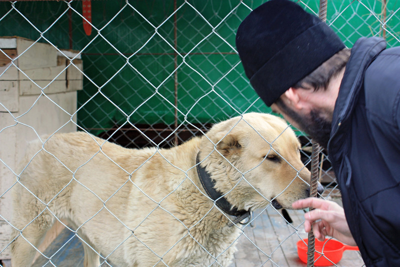 Priest with one of the monastery's guard dogs.