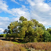 Penza landscape.