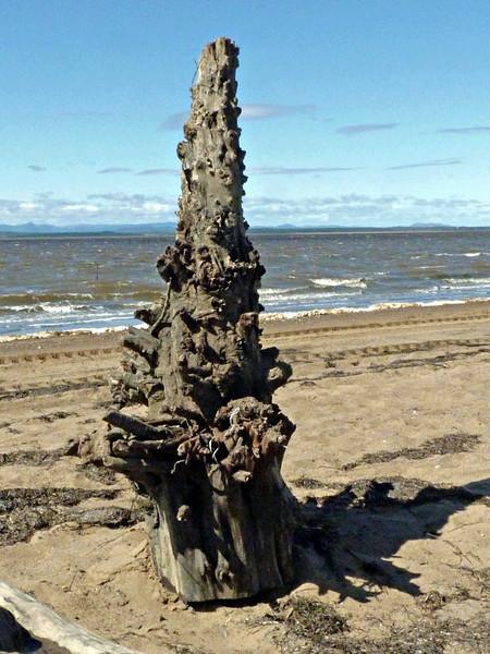 A big piece of driftwood.