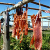 Drying fish in the sun.<br /> <br /> Юккола - нивхи называют так рыбу сушеную