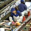Salmon processing.