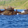 Sea lions. (Moneron Island, Russia)
