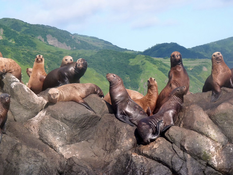 Sea lions sunning themselves.