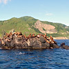 Even during the 'off' season there were hundreds of sea lions basking in the sun & frolicking in the ocean.