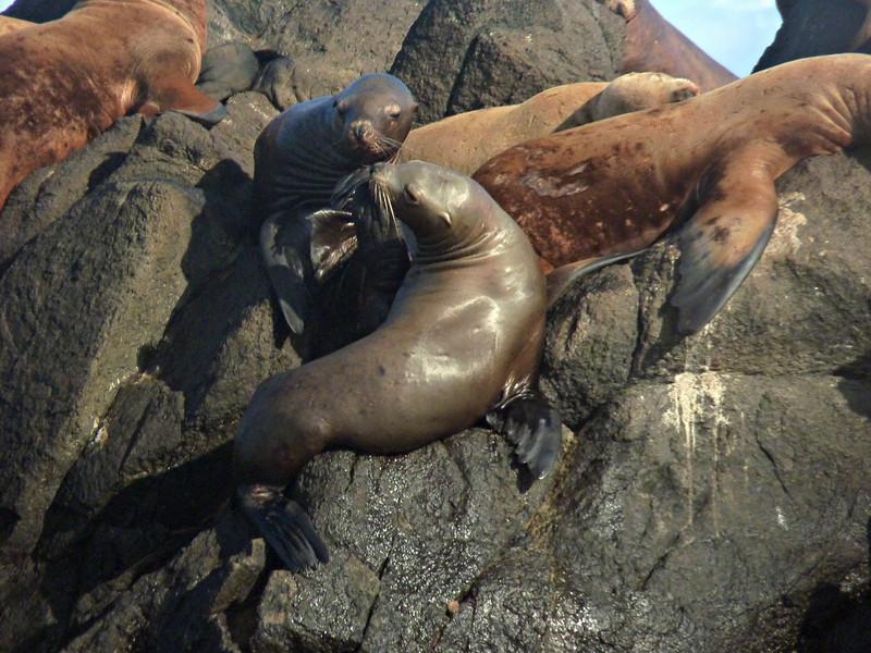 Sea lion kiss.