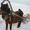 Tatar fisherman's horse & sled.