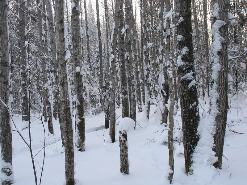 Camouflaged game ranger in the Siberian forest.