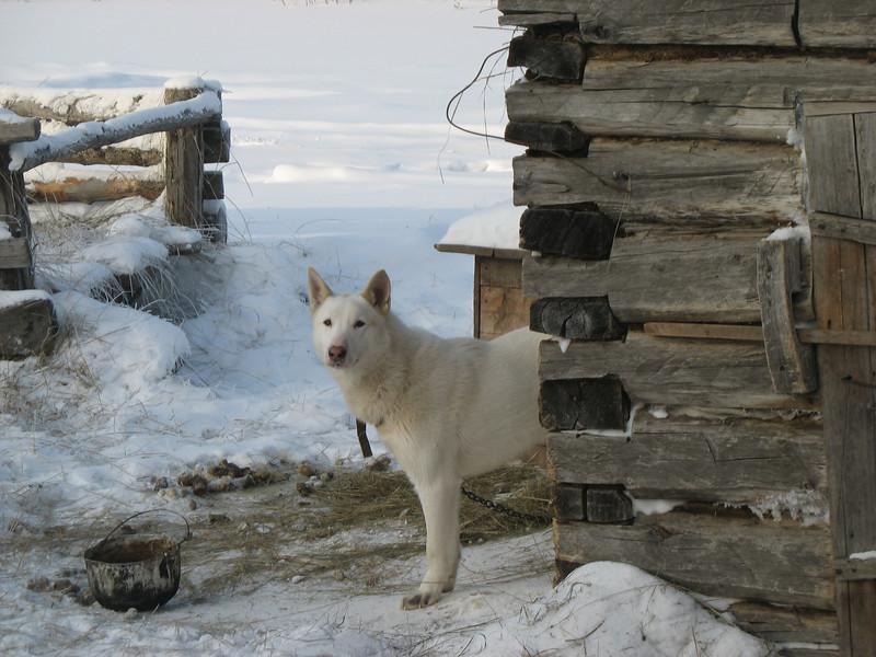 Eskander's guard dog.