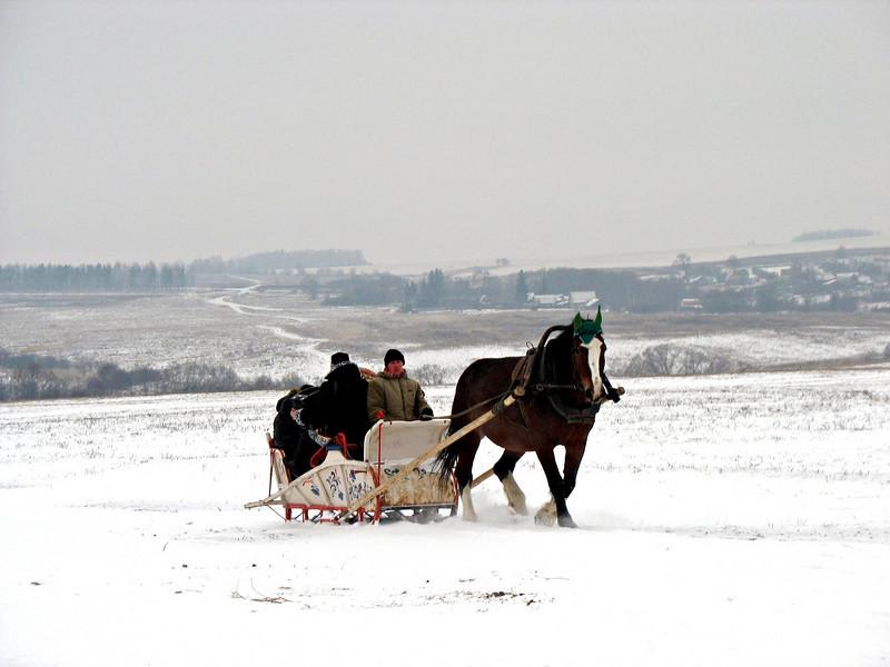 Vladimir Heavy Draft horse at work.