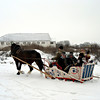 Vladimir Heavy Draft horse pulling a sleigh full of people.