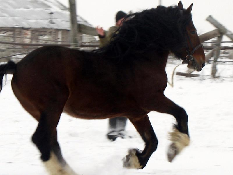 Wintery gallop.