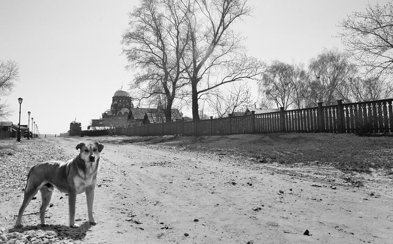 Dog's life, Swiyazhk