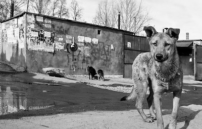 Dog's life, Kazan