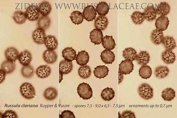 Russula clariana - plávka topoľová
