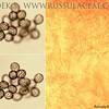 Russula faustiana - plávka Faustova