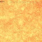 Russula langei - plávka Langeova