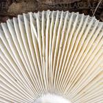Russula syringina - plávka orgovánová