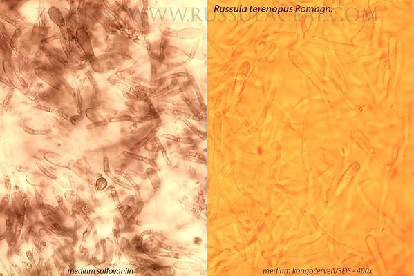 Russula terenopus - plávka drobivá