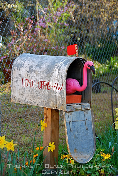 """""""Lloyd Openshaw, you have mail!""""  Fiddletown, Amador County, CA. Note blooming daffodils. (Photo won first place in annual competition open to general public.) [UFP 032709]"""
