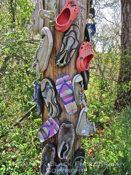 "Different variety of ""shoe tree."" Cape Cod, MA. [UFP050712]"