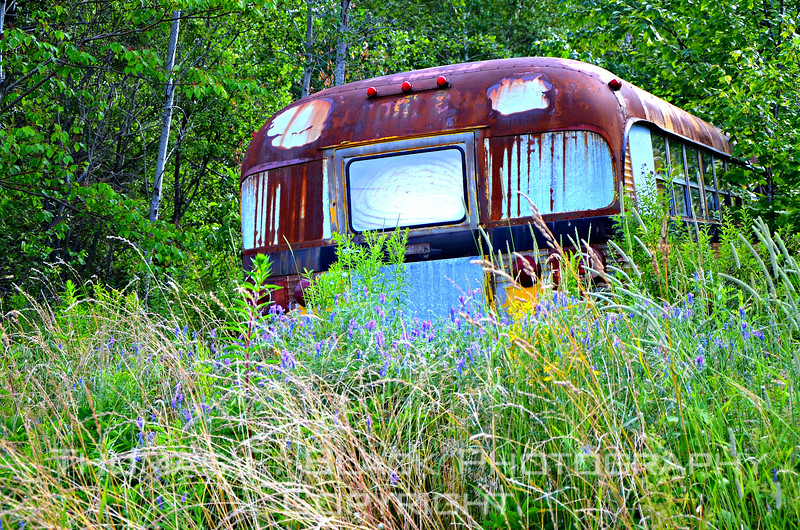 This and two frames following, discarded International Harvester school bus, Hwy. 1 outside Ellsworth, ME. [UFP071911]