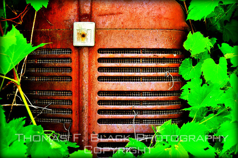 Nose of antique tractor swaddled in wreath of ivy inside barn, Hudson River Valley, NY. [UFP052710]