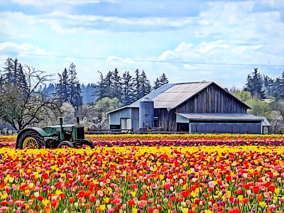 Tulips, Tractor and Barn