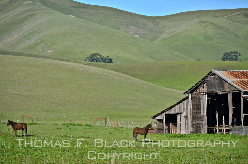 This frame and next, working horse ranch, N. Livermore Road, Contra Costa County, CA [UFP022711]