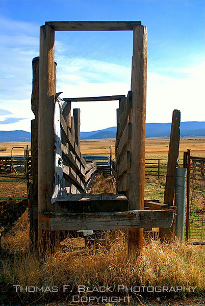 Cattle chute, Hwy. A23, Plumas County, CA. [UFP 111009]