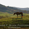 This and frame following, horse in pasture, Marin County, CA. [UFP 010409]