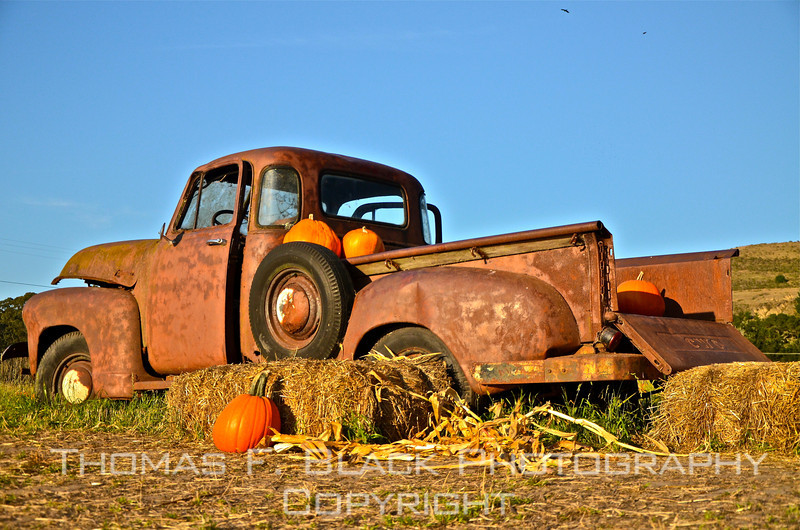 This and nine frames following, Half Moon Bay and environs, CA. Situated on Highway 1 in San Mateo County, locale is regarded as pumpkin-growing capital of California. Truck is circa1950 GMC. [UFP102611]