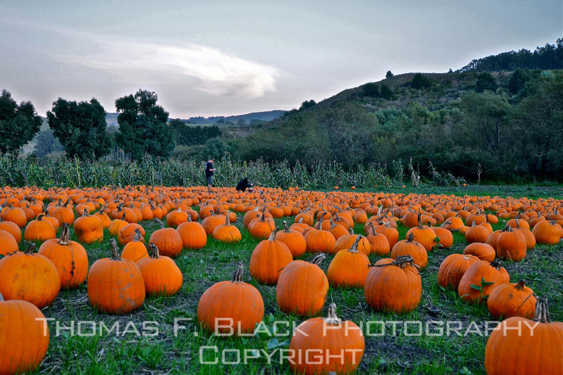 Hwy. 92 just east of Half Moon Bay, CA. Note couple in background. Woman (kneeling) is taking picture of young child posed amidst pumpkins. [UFP102611]