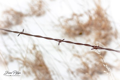 A piece of barbed wire with a bit of frost attached to it. Enjoy and hold hands.