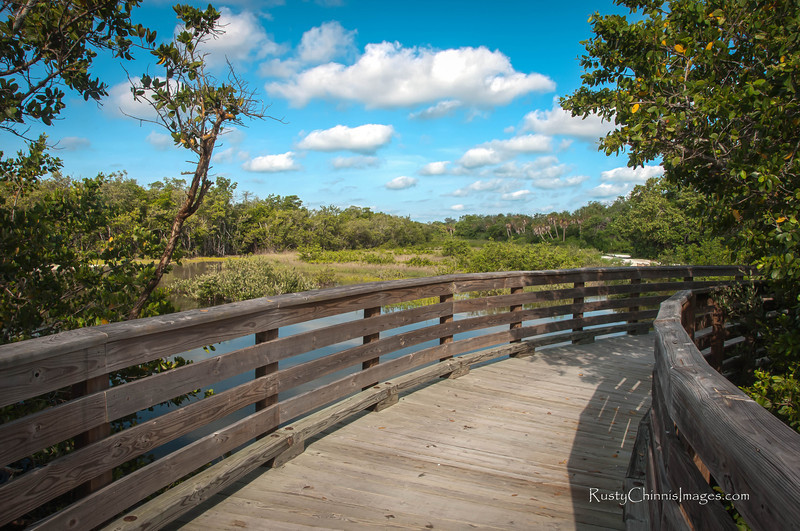 Several bridges feed water from Tampa Bay to the mangroves of Robinson Preserve.