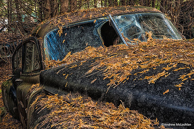 Dilapidated Car in Cedar Forest