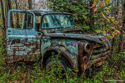 Rusted Old Truck in Forest
