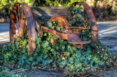 Rusty Artifact - Vancouver Island, British Columbia, Canada