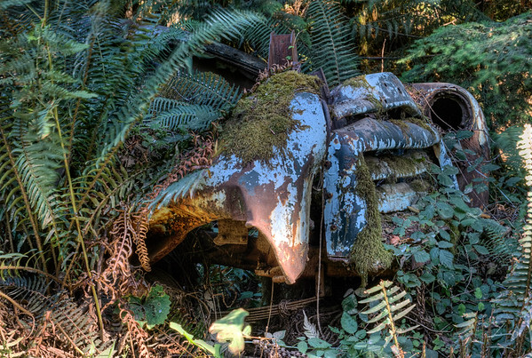 Abandoned GMC Truck - Cowichan Valley, BC, Canada