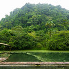 Pond Surrounded by Green Jungle