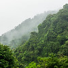 Mist Clinging to the Jungle Moutains
