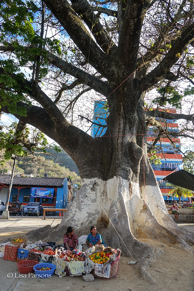 Women Selling Fruits and Vegatables Under Large Tree in the Central Plaza